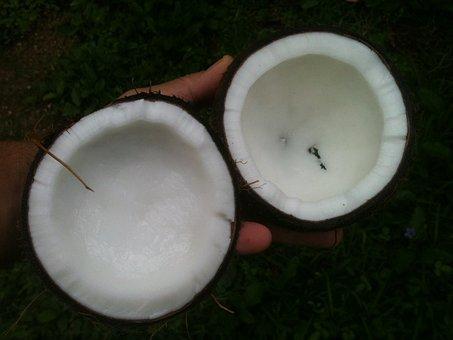 Coconut, Oil, White, Palm, Aromatherapy, Coco, Organic