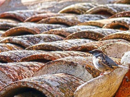 Sparrow, Roof, Texas, Lookout, Bird