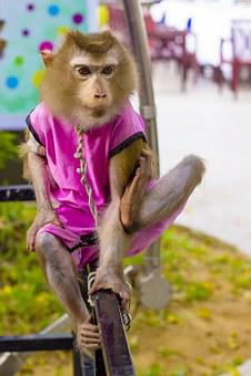Pet Monkey, Monkey, Foot, True, Gas, Action, Squeeze