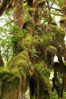 Rainforest, Branch, Tree, Green, Moss, Wet, Nature