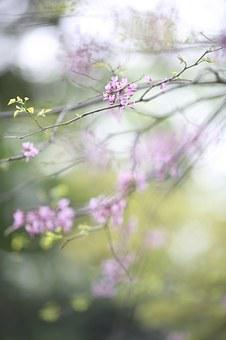 Pink, Blossom, Nature, Tree, Branch, Bloom, Petal