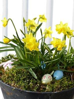 Flower Arrangements, Pot, Eggs, Easter, Easter Lilies