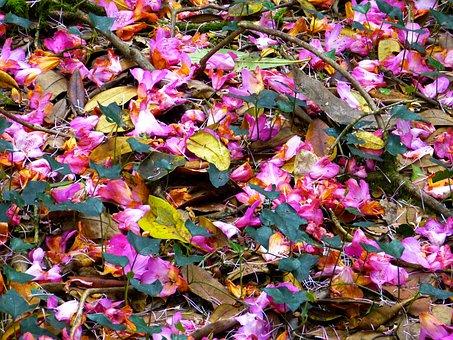 Petals, Colorful, Shades Of Red, Rhododendron, Pink