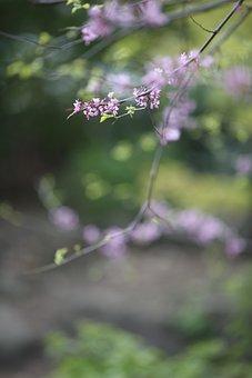 Pink, Blossom, Nature, Tree, Branch, Bloom, Petal