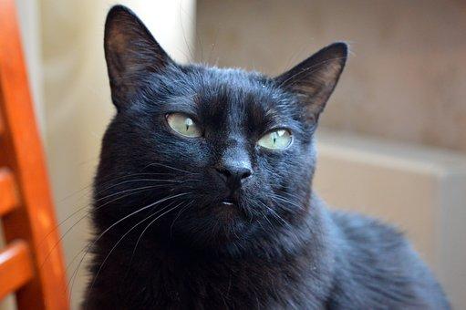 Cat, Home, Cat Looking, Pets, Views, Animals, Pet