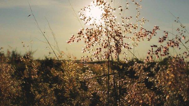 Flower, Meadow, Daisy, Sun, Nature, Grass, Spring