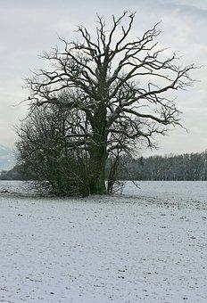 Winter, Snow, White, Silhouette, Tree, Individually