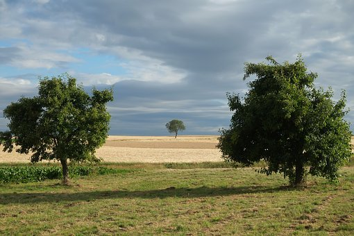 Trees, Summer, Nature, Landscape, Field, Seasons