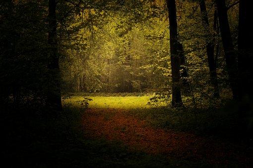 Light, Forest, Landscape, Forest Landscape, Nature