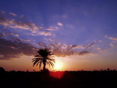 Kerkennah, Sun, Palm, Nature, Lying Sun