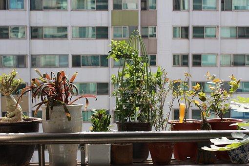 Potted Plant, Apartments, Veranda, Plants, People Tree