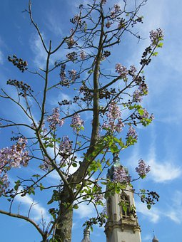 Tree, Spring, Church, Sky, Clouds, Blooms, Blooming