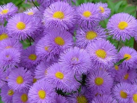 Violet, Flower, Meadow, Nature, Floral, Purple, Summer