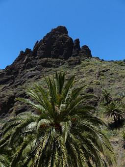 Masca Ravine, Mountains, Teno Mountains, Tenerife, Palm