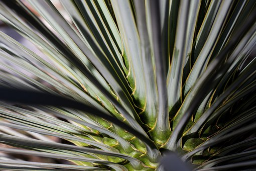 Palm, Concentric, Rotated, Leaves, Fan Shaped, Biodata