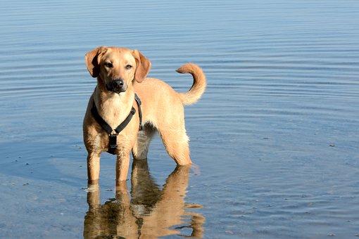 Dog, Young Dog, Cute, Hybrid, Animal Portrait, Brown