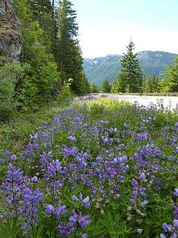 Bergstrasse, Roadside, Flower Ribbon, Mountain Region