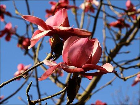 Small Valley, Stang Alar, Brest, Flower, Tree