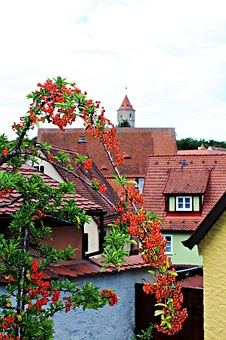 Firethorn, Plant, Historic Center, Roofs, Historically