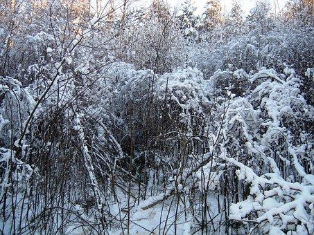 Winter, Shrubs, Plein Air