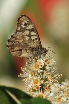 Butterfly, Butterflies, Insect, Animals, Animal