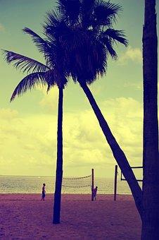 Florida, Fort Lauderdale, Palm Trees, Beach, Sunset