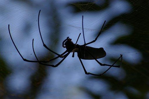 Spider, Creepy, Insect, Spiderweb, Dark, Scary, Black