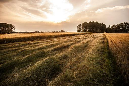 Countryside, Fields, Agriculture, Albiano, Canavese