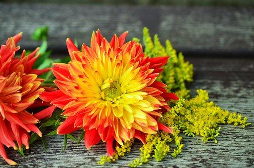 Flowers, Dahlias, Flower Garden, Dahlia, Autumn