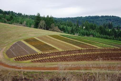 Farm, Scenery, Farmland, Country, Countryside, Meadow