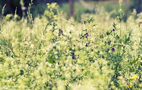 Grass, Field, Flowers, Green, Summer, Grass Field, Sun