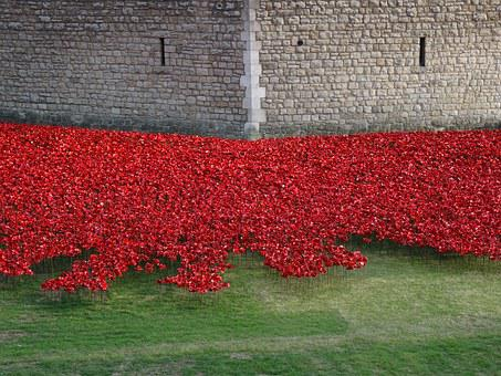Flowers, England, Tower, London, Commemorate, Poppies