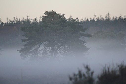 Tree, Patch Fog, Mystical, Forest