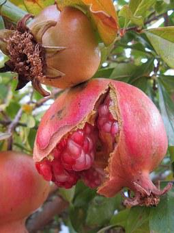 Pomegranate, Sweet, Red, Fruit, Love Apple, Juicy, Ripe