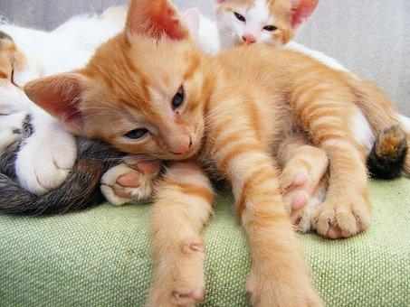Animals, Cats, Kitten, Playful, Playing, Mammals, Furry