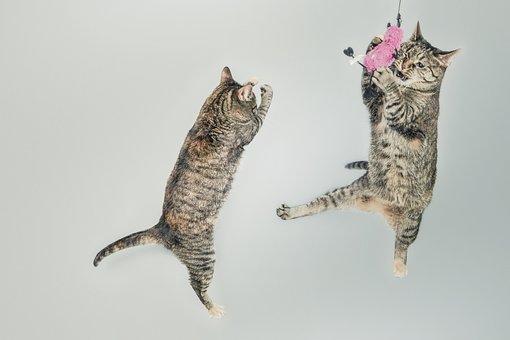 Cats, Jump, Play, Playful, Feline, Kitten, Domestic