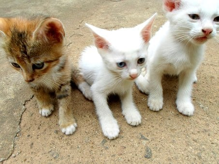 Cats, Kittens, Animals, Mammals, Baby, Small, Kitty