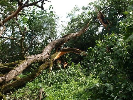 Tornado Damage, Tree, Force Of Nature