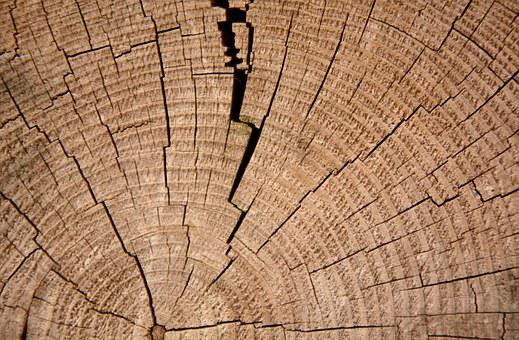 Annual Rings, Tree, Wood, Cross Section, Old
