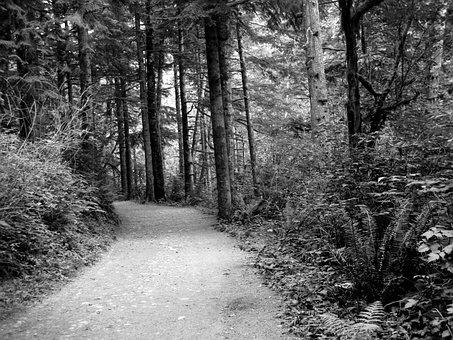 Path, Woods, Black And White, Tree, Dark, Foliage