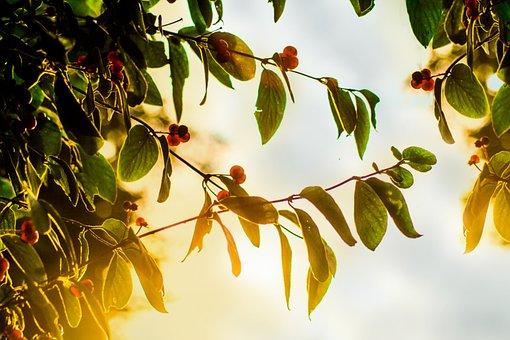 Leaves, Tree, Nature, Bear, Bush, Aesthetic, Autumn