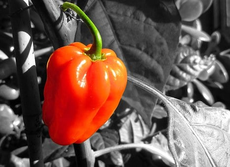 Pepper, Red, Food, Healthy, Vegetable, Fresh, Spice