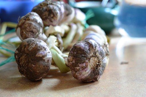 Garlic, Spices, Spice, Garlic Główkowaty, Kitchen