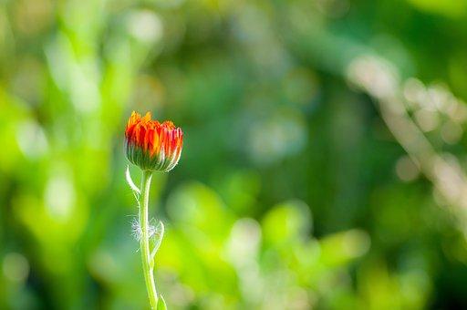 Flower, Red, Green, Spring, Summer, Nature, Blossom