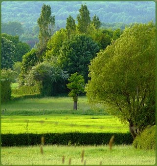 Trees, Meadow, Reported, Landscape, Nature, Park, Tree
