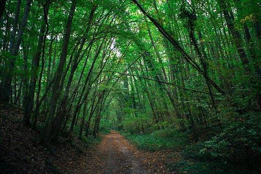 France, Wood, Nature, Path, Camber, Dark