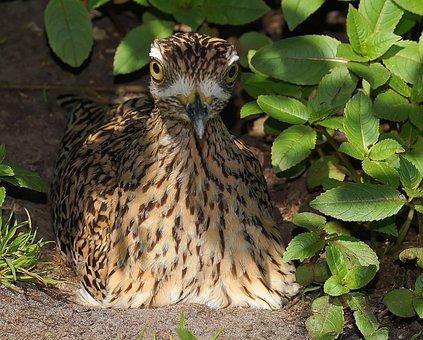 Bird, Mother Bird, Hatching, Attention, Watch, Vigilant
