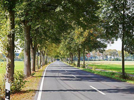 Road, Avenue, Münsterland, Germany, Frühherbst, Emerge