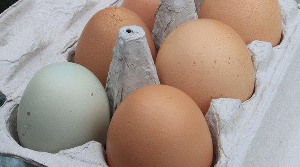 Eggs, Fresh, Farm, Organic, Eggshell, Raw, Unwashed