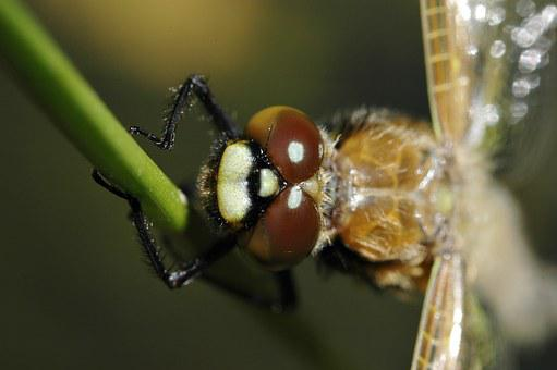 Dragonfly, Hatch After, Macro, Insect, Animal, Crawl